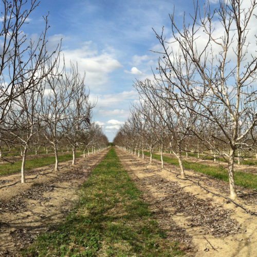March 28 Orchard